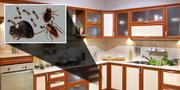 City Best Pest Control - Best Pest Control company