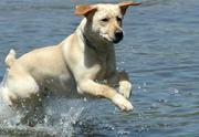 Official Service Dog Registry